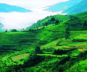 谁是邦崴古茶的历史主人?五房茶马古道考察记