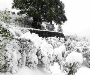 茶市预测:云南遭遇霜冻 明年普洱价格是否飙升?