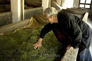 茶友须知:萎凋程度与茶叶的品质