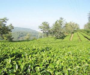 云南首个省级出口茶叶质量安全示范区通过验收