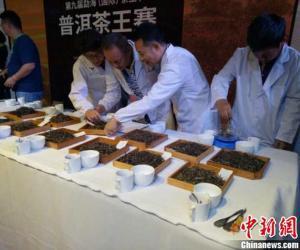 """中国普洱茶第一县上演""""茶王""""争霸赛 吸引14余万游客"""